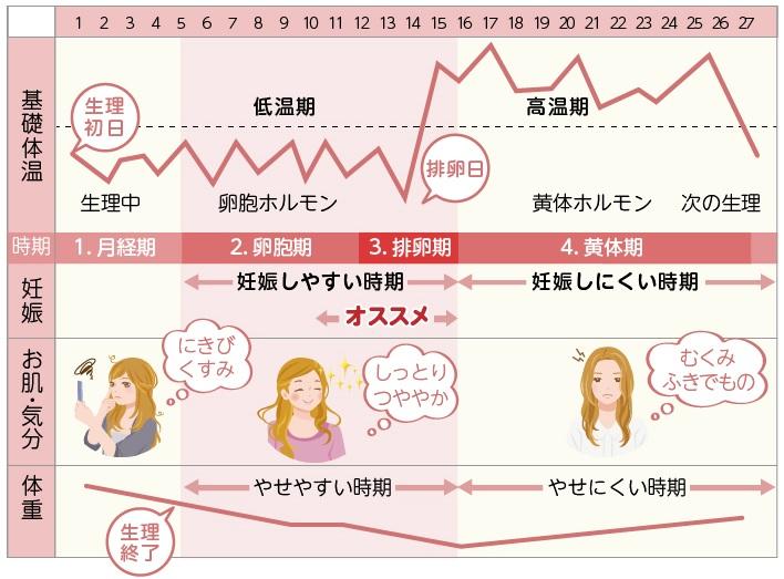 体重増加 排卵日